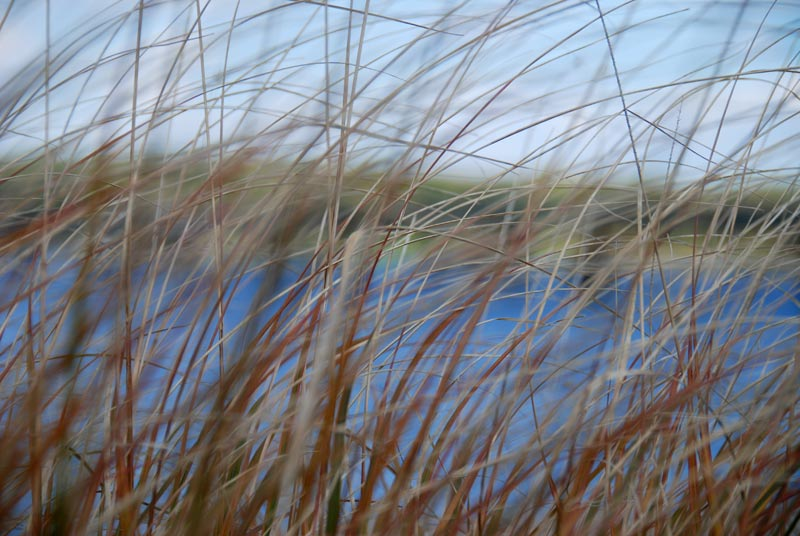 Severn River through the reeds.