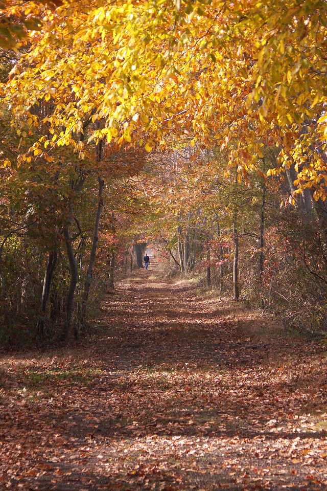 Fall pathway in the Jug Bay preserve.