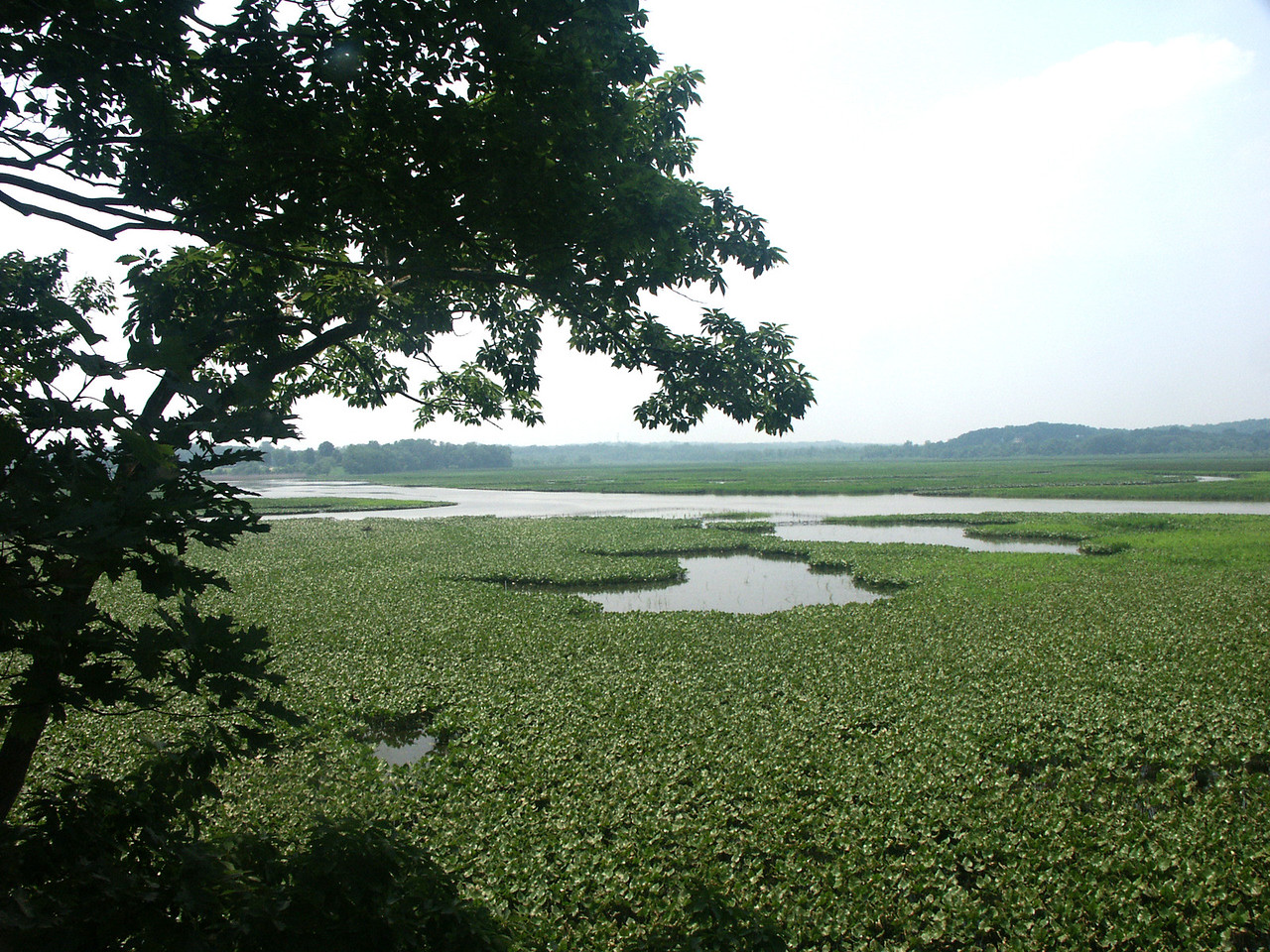 View of Jug Bay marshlands about 20 miles south of Ananpolis.