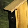 05 Bird peeking out