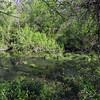 18 Lush wide water area of C&O upstream of Rileys Lock