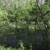 17 Lush wide water area of C&O upstream of Rileys Lock