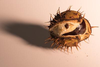 Chestnut 10.21.17