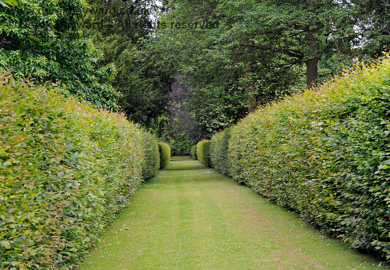 Sheltered walks within hedges lead from the lake up into the outer parts of the gardens.  22.0.2014  9668