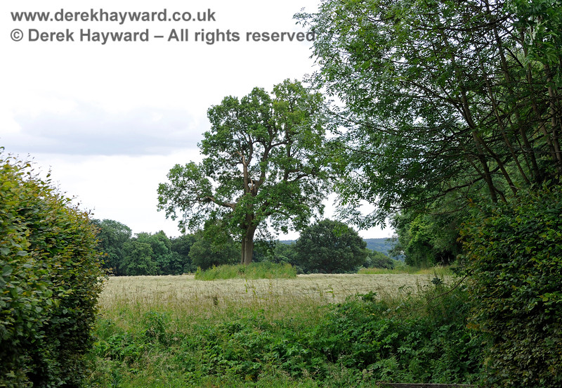Looking south over outlying parts of the Chevening Estate.  22.06.2014  10715