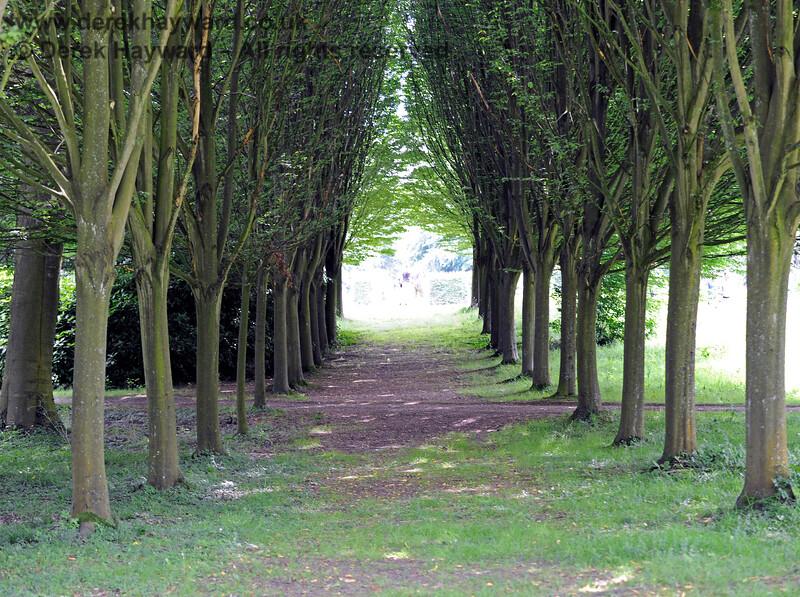 The Long Walk, Chevening Estate. 22.06.2014  9607