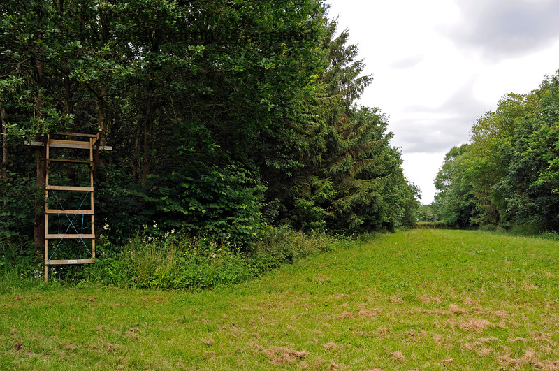 Sheltered walks in outlying parts of the Chevening Estate.  22.06.2014  10720
