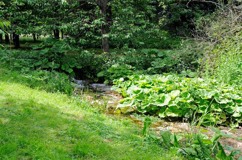 The Stream adjacent to the Long Walk, Chevening Estate. 22.06.2014  10694