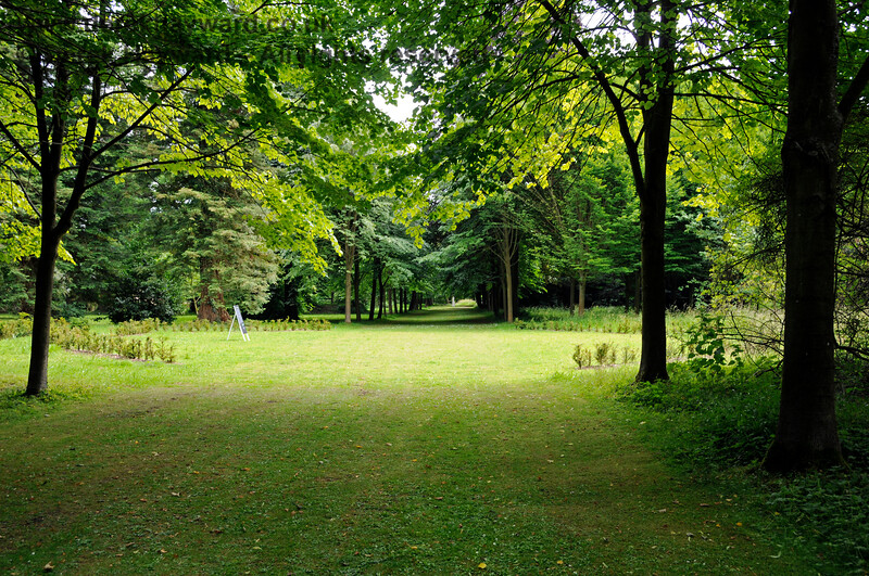 The Long Walk, Chevening Estate. 22.06.2014  10692