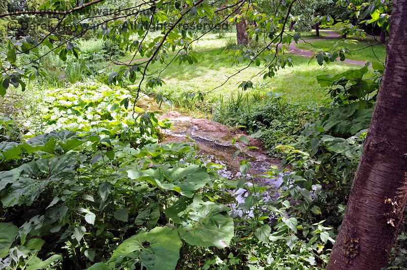 The Stream adjacent to the Long Walk, Chevening Estate. 22.06.2014  10693