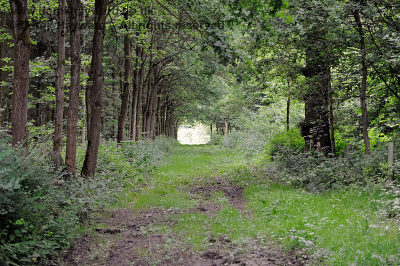 Sheltered walks in outlying parts of the Chevening Estate.  22.06.2014  9631