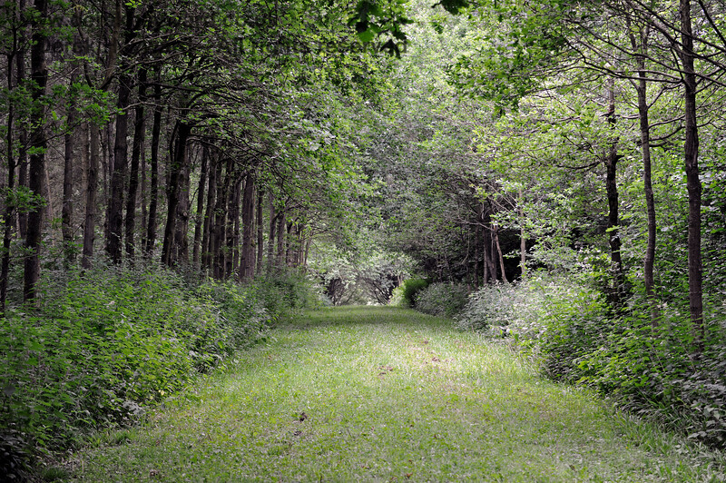Sheltered walks in outlying parts of the Chevening Estate.  22.06.2014  9630