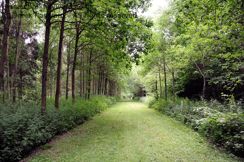Sheltered walks in outlying parts of the Chevening Estate.  22.06.2014  10719