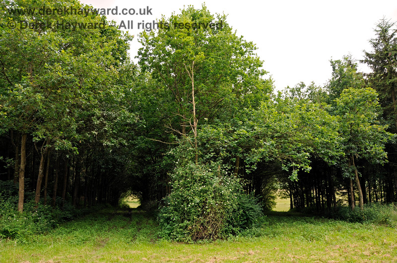 Sheltered walks in outlying parts of the Chevening Estate.  22.06.2014  10722