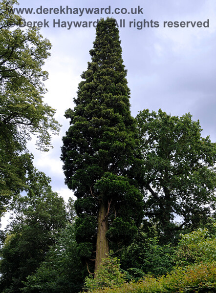 There are a large selection of trees within the gardens.  22.06.2014  10730