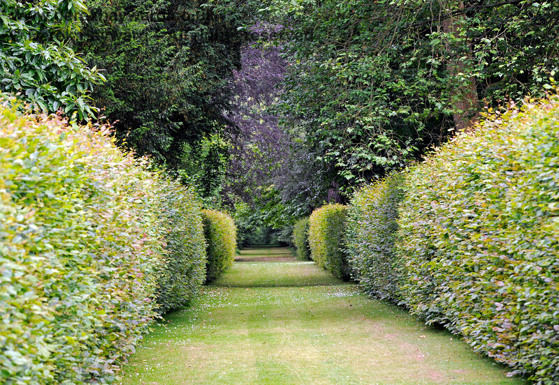 Sheltered walks within hedges lead from the lake up into the outer parts of the gardens.  22.0.2014  9667