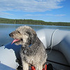 This is our dog gone dog Jake at our favorite fishing hole.  He loves cruising.