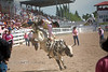 Going Off the Back End - Cheyenne Frontier Days Rodeo - Photo by Pat Bonish