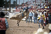 One of the Wildest 8 Seconds of Yer' Life - Cheyenne Frontier Days Rodeo - Photo by Pat Bonish