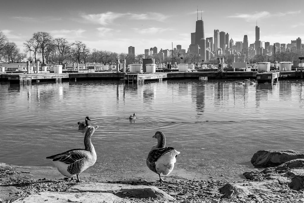 IMAGE: https://photos.smugmug.com/ChiTown/Chicagoing/i-H5xC5q6/0/3134e614/XL/4585%20edit-XL.jpg