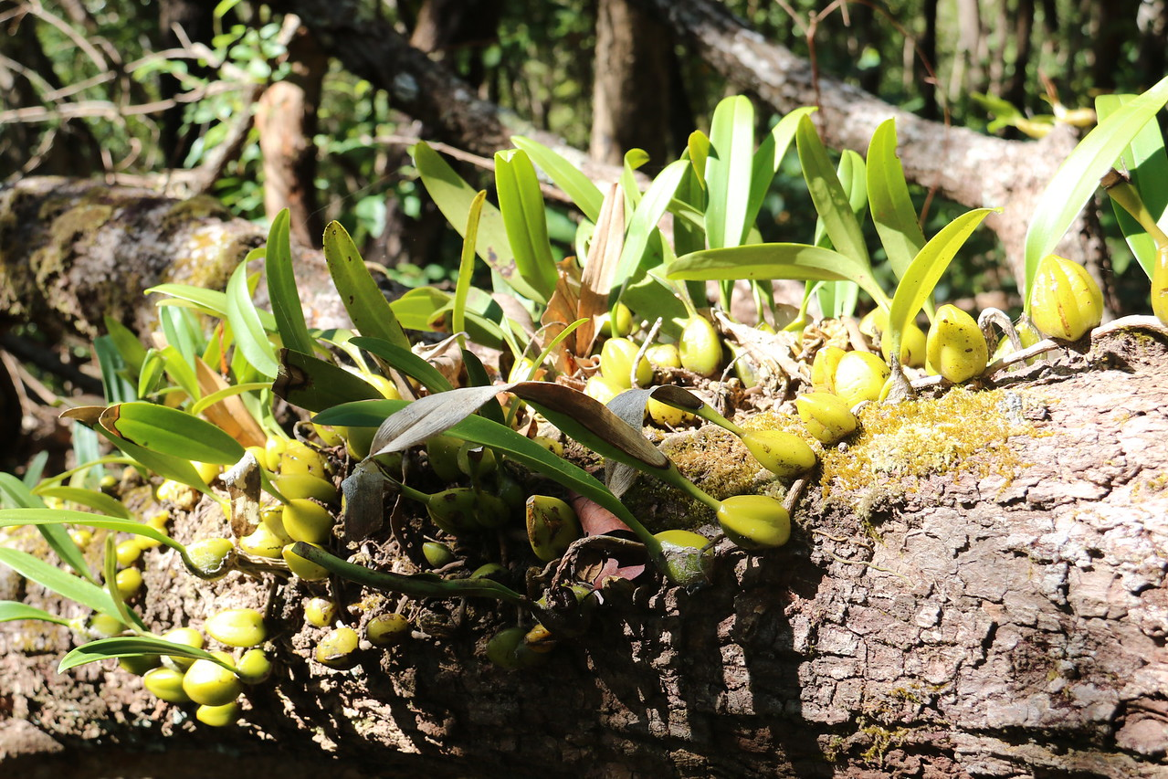 Wild orchids on a fallen tree