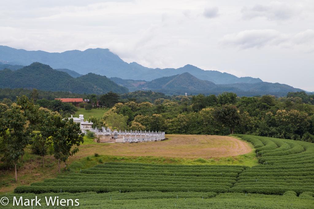 tea farm in Chiang Rai