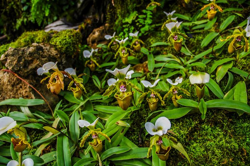 Royal Flora Ratchaphruck orchid exhibits