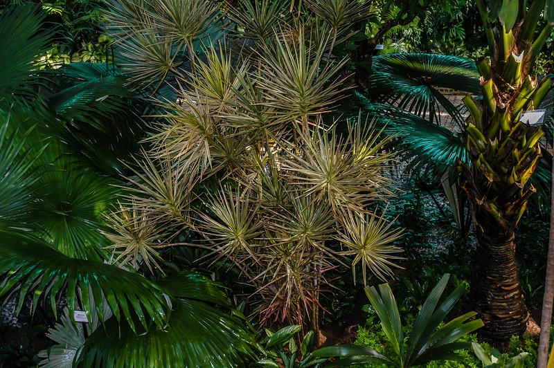 Royal Flora Ratchaphruck Shaded Paradise exhibit