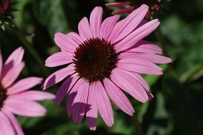Purplish Flower in Grant Park
