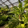 Chicago Park District Garfield Park Conservatory Fern Room