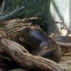 Shedd Aquarium Amazon Exhibit  Small Anaconda
