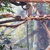 Shedd Aquarium Amazon Exhibit