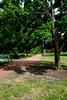 North Pond Path #2