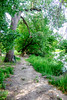 North Pond Ad Hoc Path