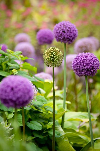 Flowers in Millennium Park.