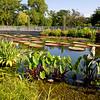 Humboldt Park prairie-style garden.