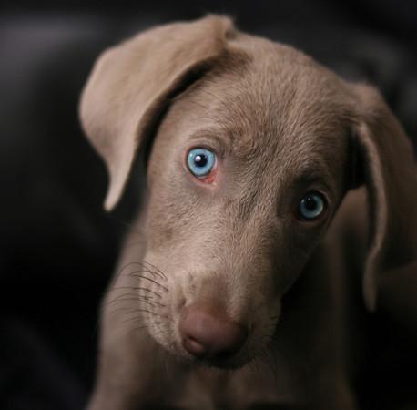 Pet Photography, pet photographer, Candace Zynda photography, Chicago pet photographer