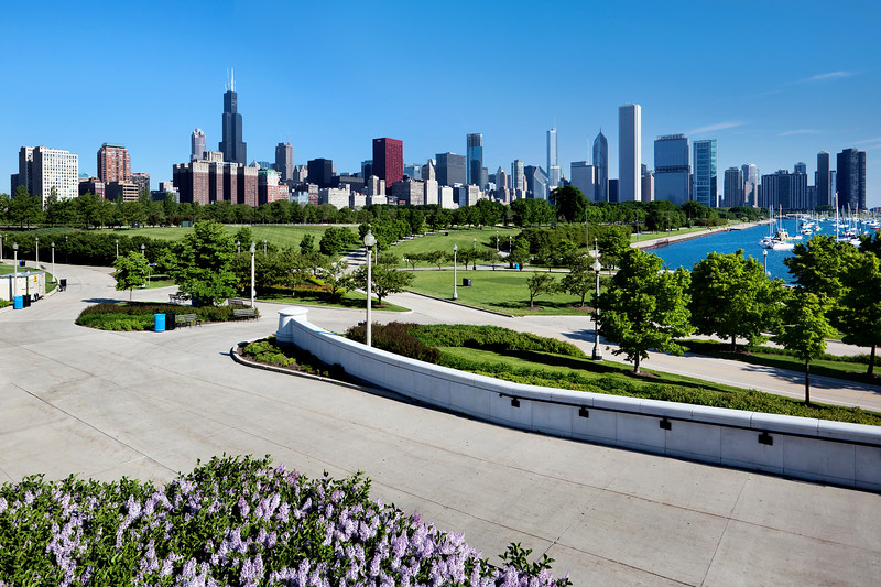 Chicago Park and Skyline with foreground flowers