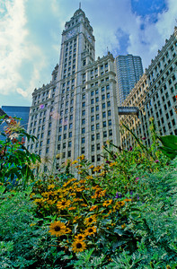 The Wrigley Building, Michigan Avenue