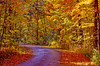 Morton Arboretum Fall Color