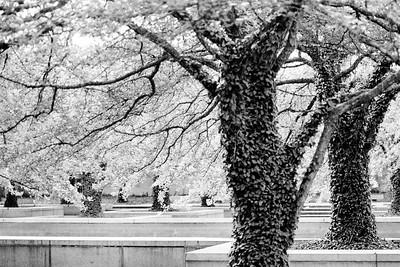 Trees Chi 2