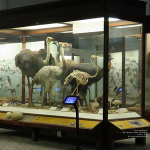Field Museum May and June  2016
