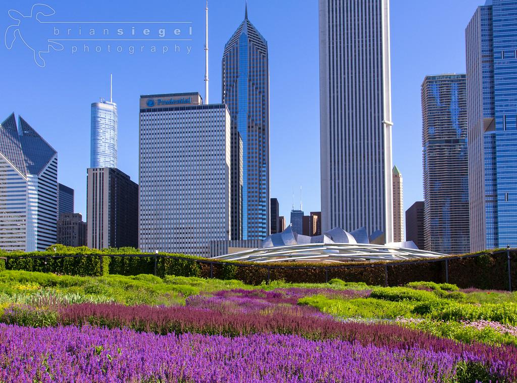 City View from Millennium Park