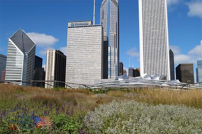 Skyline over native plants, Millenium Park