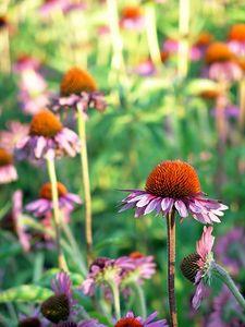 Flowers  Lurie Garden, Millennium Park,  Chicago