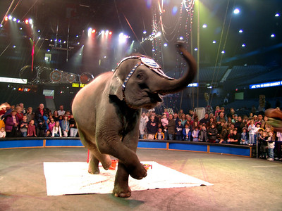 Ringling Bros. and Barnum & Bailey Circus  who wouldn't love a dancing elephant?