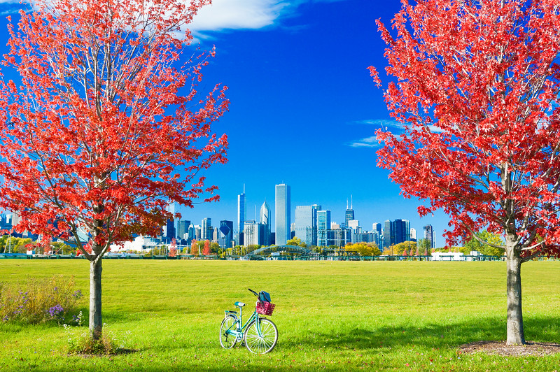 Fall Foliage and Chicago Skyline 1
