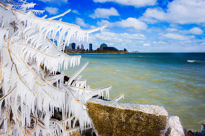 Icy Tree on Lake Michigan