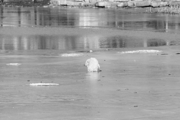 Chicago Fire Department : 687 Rescues Dog From Ice Covered Humboldt Park Lagoon 2/20/13