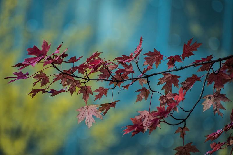 A Souvenir Of Autumn (II)